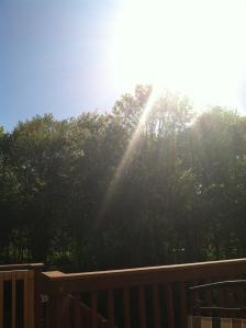 Sunny sunshine!