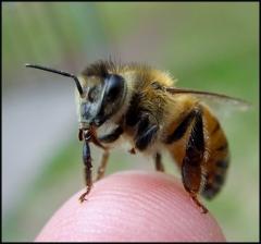 Bye bye bees