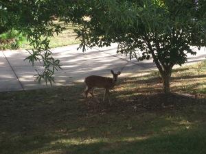Bill the deer