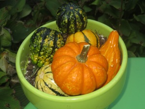 Just a bowl of pumpkins, but it's lovely ain't it?!