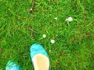 Daisies, Hyde Park