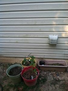 Outrageous! Plants pots! How common!