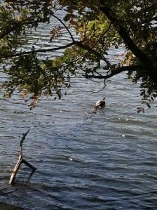 A lonesome turtle sunbathing