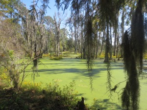'Follow the green boggy swamp....'