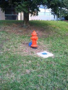 See, tis orange!