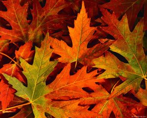 You can't deny that the leaves are lovely!