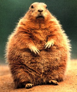 Be safe little groundhogs!